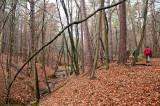 Trekking In Beech Forest Ravines