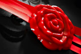 Red Rose Seal