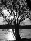 Tree And River