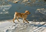 BRAVE DOG'S ADVENTURE