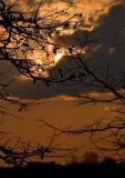 Twigs In The Sky
