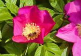 Wild Rose's World