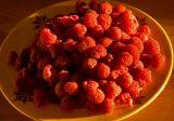 Sunny Raspberries