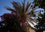 Sunny Palmtree
