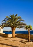 Seaside Palmtrees