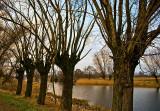 Willows Of Mazowsze