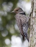 Backyard birds, Kerrisdale