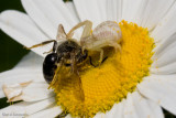 Unlucky Bee