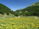 Almwiese bei der Auffahrt zum Sisko jezero (Montenegro)