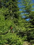 Robert bei der Überwindung eines durch Hangrutschung verlegten Forstweges