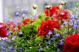 Flowers @f5.6 D700
