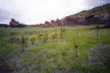 Red rocks in Denver CO Reala