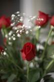 Roses @f2 5D
