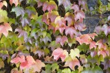 Coloured vine 5D