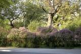 Lilac @f8 5D