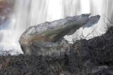 Great Falls - 002.jpg