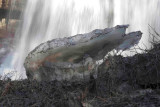 Great Falls - 003.jpg