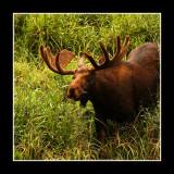 Moose Gallery