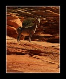 Red Rock Watcher