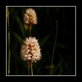 Beauty Hiding in the Long Grass