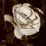 Memories of Beauty So Desired