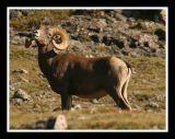 Rocky Mountain Big Horn II