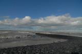 Herringulls on sea-dike  Holland