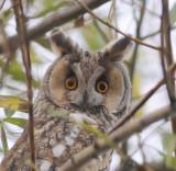 Owls & and Birds of prey