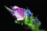 Flower Shots 2010