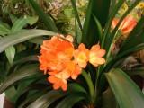 960-DSC02834 flowers (100622031).jpg