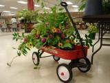 960-DSC02835 flowers (100622032).jpg