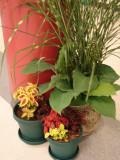 960-DSC02837 flowers (100622034).jpg