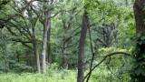 MCKEE MARSH ILLINOIS - FOREST SCENE - OAK-HICKORY FORESTS (2).JPG