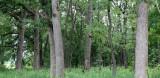MCKEE MARSH ILLINOIS - FOREST SCENES (3).JPG