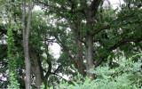 MCKEE MARSH ILLINOIS - FOREST SCENES.JPG