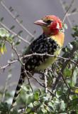 Birds of Kenya, 2012