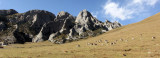 BOVID - BLUE SHEEP - SAI ZONG GOMPA QINGHAI CHINA (124).JPG