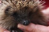 baby hedge :-)