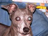 jessie 7 - cataracts.jpg