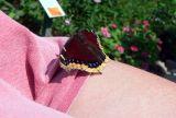butterfly me 1.jpg