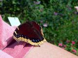 butterfly me 2.jpg