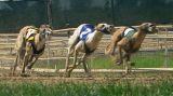 Dairyland Greyhound Track, July 16, 2006