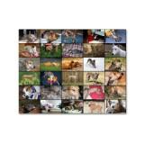 fth collage.jpg