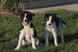 monk and sister blair at 14wks