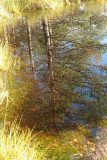Autumn in Estonian moors, swamps and forests
