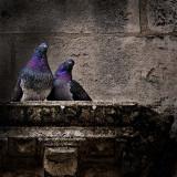 Provence insolite
