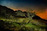 Tree at Castle Crag