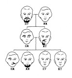 X-Y_Beards