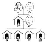 X-Y_Dog-houses