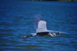 A Bird in the Lens